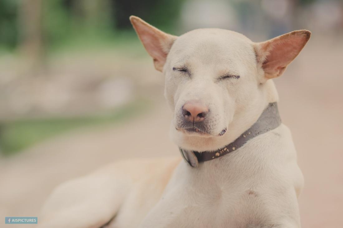 street dog in dhaka